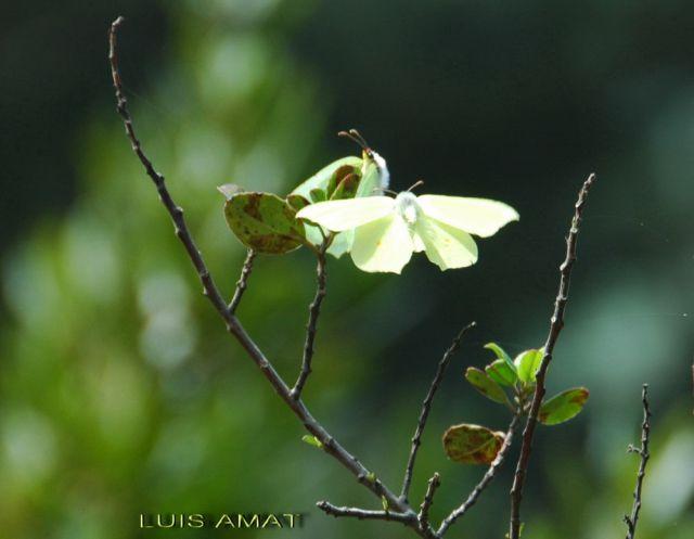 Alas de mariposa Dsc_0796-640x640x80