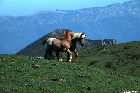 Libres por los Lagoas de Covadonga