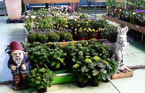 enanito entre plantas