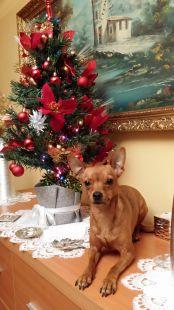 chiki debajo del arbol de navidad