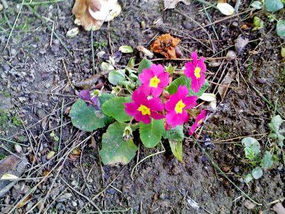 aviso primavera