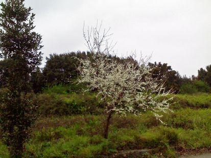 tiempo de floracion