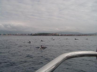 Delfines en Gijón