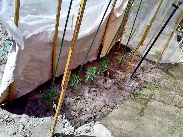 plantacion casera