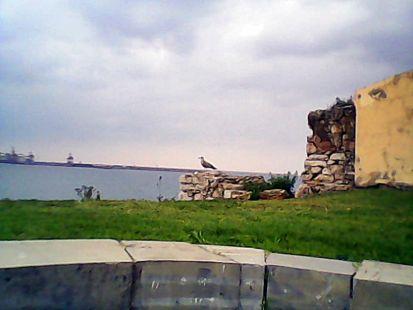 ruinas con gaviota