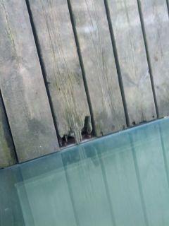 Mal Estado madera - Oficina Turística Escalerona con tornillos como puntas (peligro)
